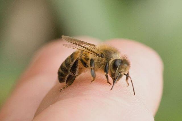 ФАО роздала 150 бджолосімей