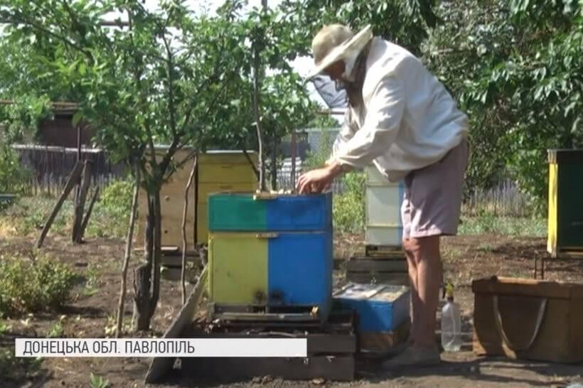 Бджоли-переселенці