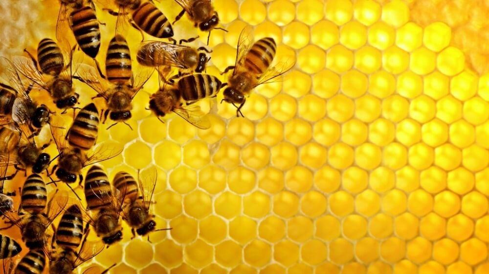 Івано-Франківщина - лідер у виробництві меду