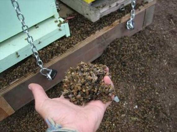 Хімікати винні у загибелі 53% бджіл
