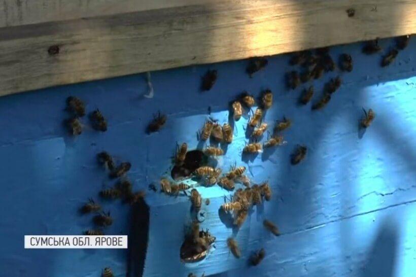 Килим із мертвих бджіл
