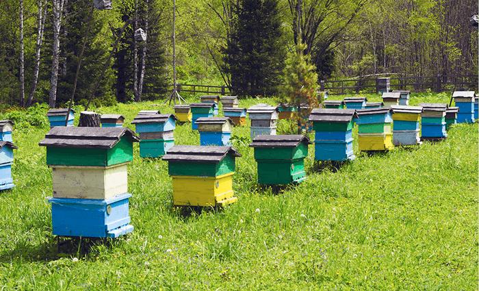 Рейтинг експортерів Українського меду