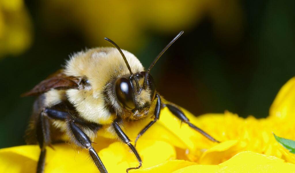 В Україні продовжують вимирати бджоли