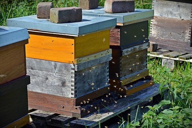 Beekeeper hives